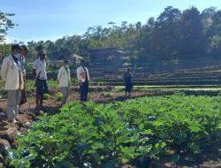 Mahasiswa UKI St Paulus Ruteng Magang di Yayasan Ayo Indonesia